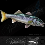 boldwater_stockfish_bass_stripe_01