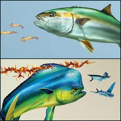 Introducing Sport Fish Wall Art Decals - Marine Logos, Websites, T ...